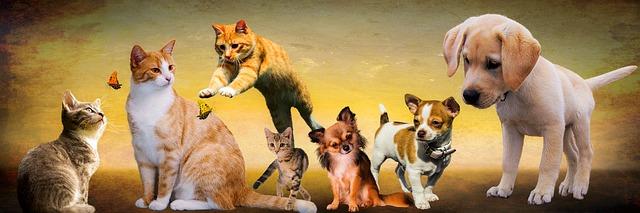 ペットの犬・猫・家畜の牛・羊・ロードキル 事故|鹿を轢いたイノシシをはねた|保険と等級