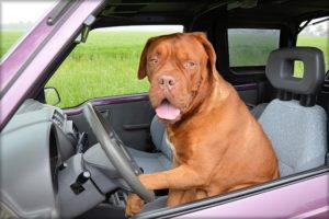 自動車保険・運転を交代・車を貸し借り・年齢条件・運転者限定・運転者の範囲